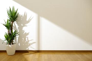 観葉植物が枯れる原因と対処法とは?詳しく解説