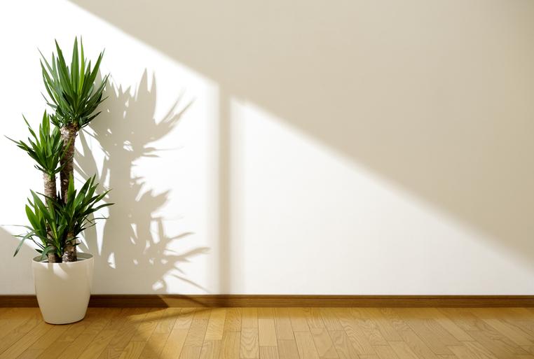 観葉植物が枯れる原因と対処法とは?詳しく解説サムネイル